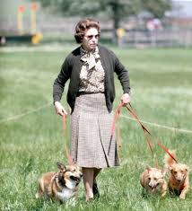 why the queen loves her corgis as much as the rest of the palace