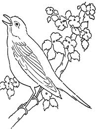 bird coloring pages to print canary coloring pages download and print canary coloring pages