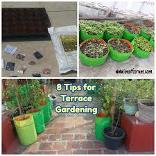 terrace gardening eight tips and ideas for terrace gardening for beginners imot