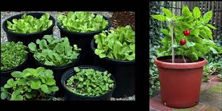 square foot gardening a small space revolution video veggie