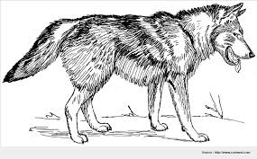 stunning wolf coloring pictures wallpaper wonderful coloring