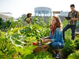 Benefits Of Urban Gardening - importance and benefits of urban gardening for our life sheknows