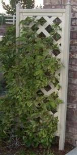 Oak Trellis Arbors Trellises
