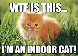 Cute Cat Memes - cute cat meme lolcat memes quickmeme