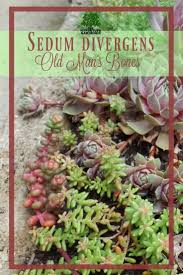 plants native to america 194 best ferns and foilage plants images on pinterest ferns