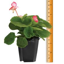 plant types and sizes i saga garden centre saga garden centre