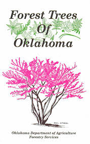 native oklahoma plants order seedlings oklahoma forestry services