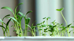 indoor herbs to grow how to grow an herb garden indoors howcast the best how to