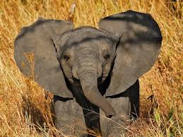 cool elephant wallpaper animals wallpaper hd cute elephant wallpaper for iphone at