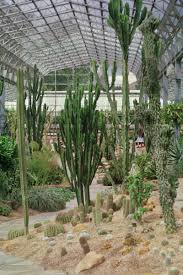 file duthie park winter gardens cactus house 1987 jpg wikimedia