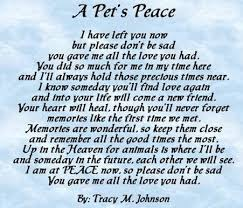 the loss of a pet pet loss how to cope helping children cope with the loss of a