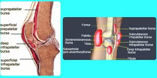 Knees Anatomy Bursitis Knee Treatment Pictures Symptoms Causes Diagnosis