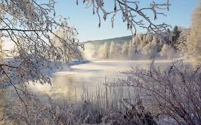 winter day snow tree twigs cold winter lanscape lake wallpaper