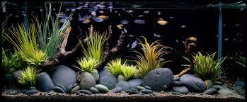 tropical maintenance fish tank boys