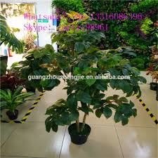 taiwan bonsai taiwan bonsai suppliers and manufacturers at