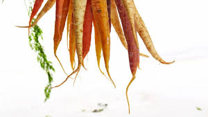 Fall Root Vegetables - 7 root vegetables to cook with this fall and winter eat north