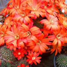 volcanic rock dust for cactus you bet remin scotland ltd