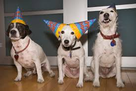 dog birthday party dogust how to throw a dog birthday party dogtime