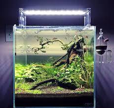 Aquascapes Com 929 Best Aquascapes U0026 Fish Images On Pinterest Aquarium Ideas