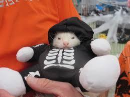 Ferret Costumes Halloween September 2015 U2013 Ferret Dreams Rescue U0026 Adoption
