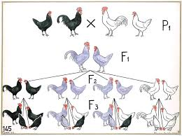 vintage genetics chickens vintage genetics pinterest genetics