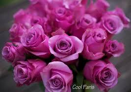 Lavender Roses The Lavender U0026 Purple Rose Study Flirty Fleurs The Florist Blog
