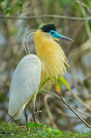 Canopy Birds by 3442 Best Beautiful Birds Images On Pinterest Beautiful Birds