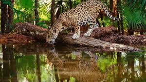 Desktop Hd Free Pictures Animals Luxury Free Animal Wallpapers For Desktop 16 Diariovea