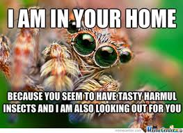 Spider Meme Misunderstood Spider Meme - misunderstood spider by recyclebin meme center