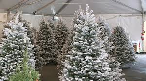 hawaii will likely see fewer more expensive christmas trees this
