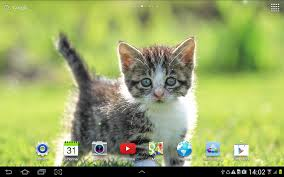 halloween kitten wallpaper cat live wallpaper android apps on google play