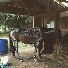 spirit halloween tempe images of halloween horse skeleton static need help finding