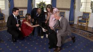 white house tours obama it s bo and sunny the obama family dogs join the today white house