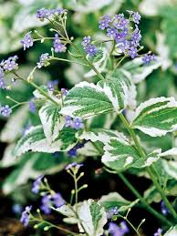 10 Best Perennials And Flowers by 13 Best My Garden Color Scheme Images On Pinterest Flower