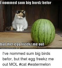 Watermelon Meme - 25 best memes about cat watermelon cat watermelon memes