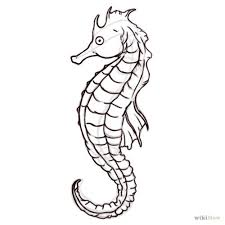 coloring marvelous drawing seahorse tattoo coloring