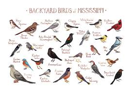 Backyard Birds Utah Mississippi Backyard Birds Field Guide Art Print Watercolor