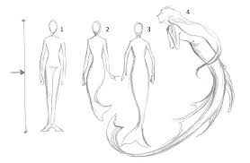coloring graceful mermaid draw tail proportions