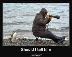 Photographer Meme - a wildlife photographer viral viral videos