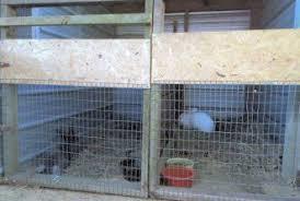 Rabbit Hutch Set Up Housing Options Flemish Giant Indoor U0026 Outdoor Hutches
