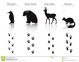 set of animal and bird trails with name vector set of black arct