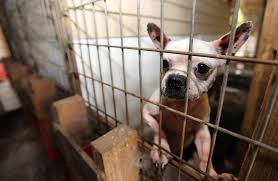 16 states named in 100 worst puppy mill breeders in the united