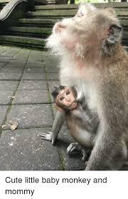 Baby Monkey Meme - cute and cute meme on me me