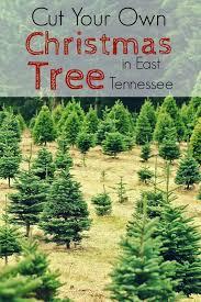 cut your own christmas tree christmas tree farm east tennessee