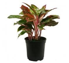 plants for office desk plants for office desk buy plants for office desk online at best