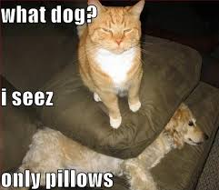 Cats Memes - 25 most adorable dogs with cats memes
