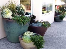 Succulent And Cacti Pictures Gallery Garden Design Container Gardens Santa Barbara Ca Photo Gallery