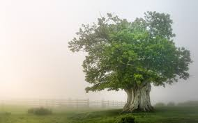 thick tree in the fog 1920 x 1200 nature photography