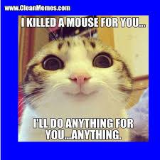 Mouse Memes - killed a mouse clean memes