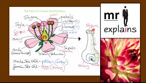 Part Of Flowers - 100 reproductive parts of flowers reproductive organ of a